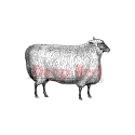 Deep Red - Cling Stamps - Wooly Sheep