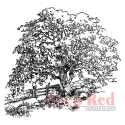 Deep Red - Cling Stamps - Maine Hayfield