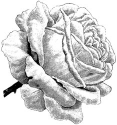 Lablanche Silicone Stamp - Single Rose