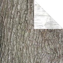 Great Outdoors Collection - Tree Bark