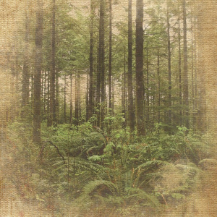 Paper House - Pine Forest