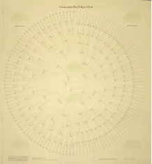 8 Generation Circular Pedigree Chart